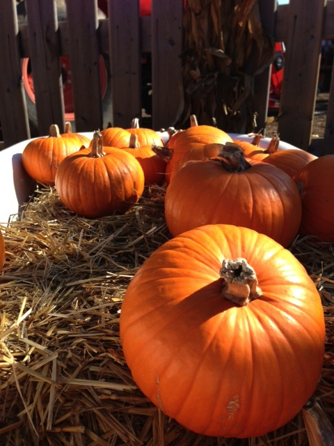 Happy Halloween! Cinnamon Pumpkin Pie Smoothie